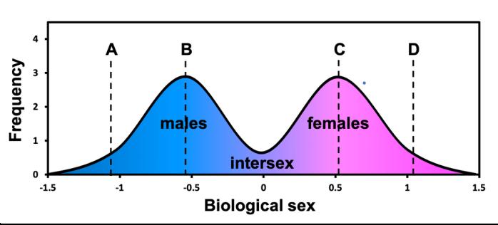 schéma biological sex